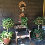 front porch topiary and bench
